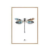 Репродукція Dragon fly / 50x70 Oak frame / 2 pcs. box