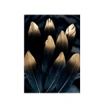 Репродукція на aluminium Alu brushed Golden feather / 50x70 Black frame